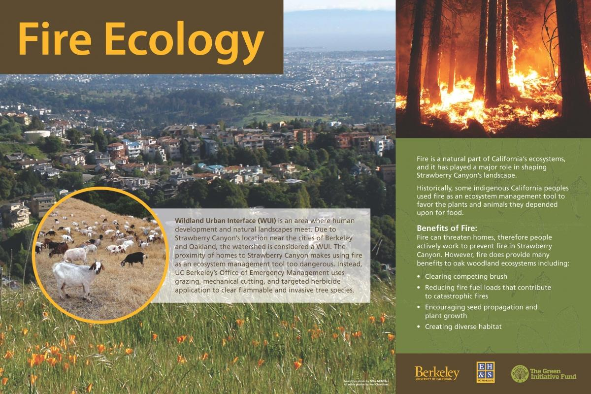 Fire Ecology
