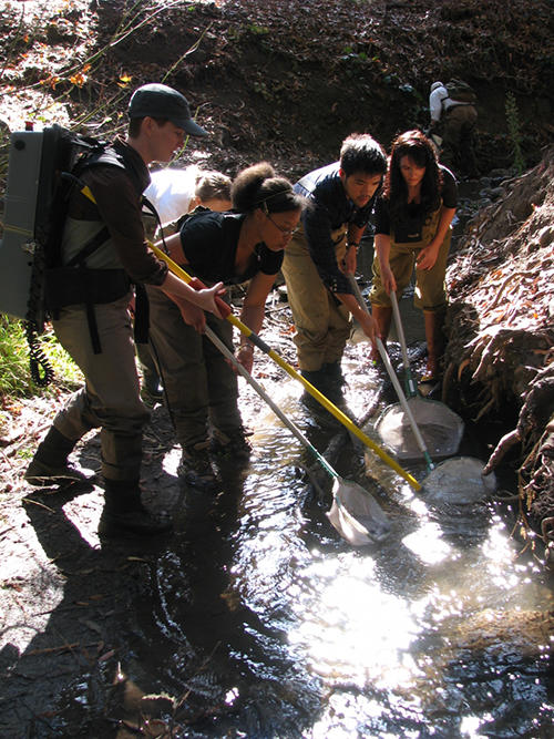 Students transfer fish