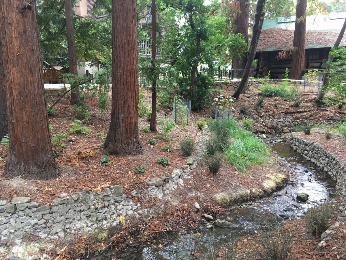 Women's Faculty Club Riparian Vegetation Enhancement Area